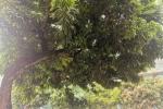 隔壁家私种的树木枝干已经压到高压电线了