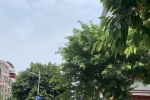 附城树木遮挡红绿灯
