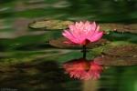 人说莲花系吉祥的,佛祖座下也是莲花