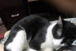 寻找失踪的爱猫