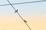 窗外的麻雀在电线杆上多嘴