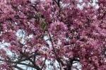 网红树,花开富贵