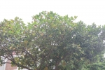 罗定气候合适种植木菠萝
