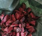 红茯苓,草龟,石金钱有售13025397579
