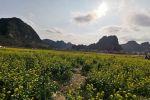 罗定海惠生态,今年有没有种油菜,真想过年去看油菜花。