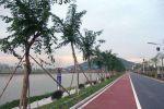罗定江罗太流域示范段综合开发利用建设项目