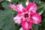 美丽小花~中秋赏花