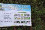 龙湾可以种植灵芝和多种药物