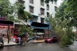 批发街有大树倒下砸到小车了