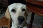 请罗镜的朋友们帮忙留意一下本人的爱犬
