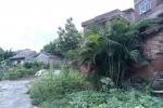 罗定识花木(1)棕榈科