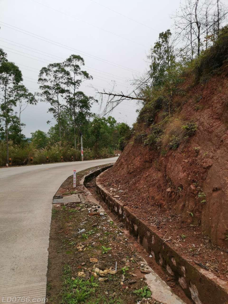 枯树横倒在路边电线上,危险,望相关部门处理一下