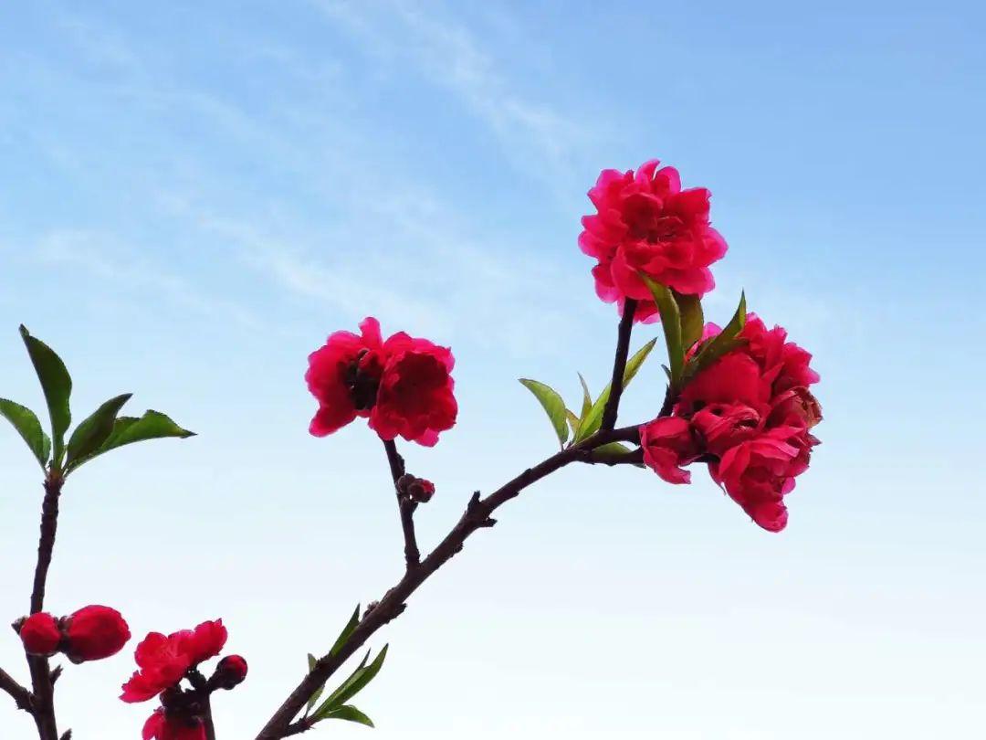 罗定最强赏花指南,美翻你的眼,你想看的花都在这儿!