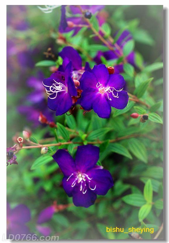 宅紫嫣红花满园01.jpg