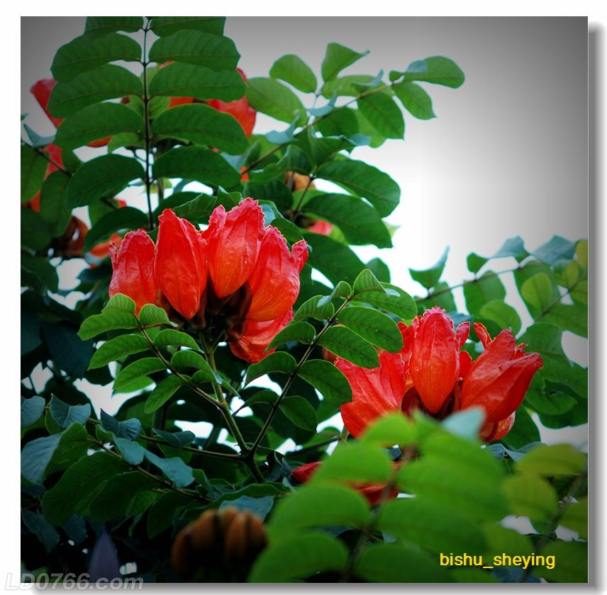 宅紫嫣红花满园02.jpg