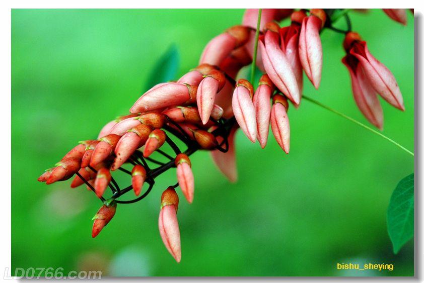 宅紫嫣红花满园07.jpg