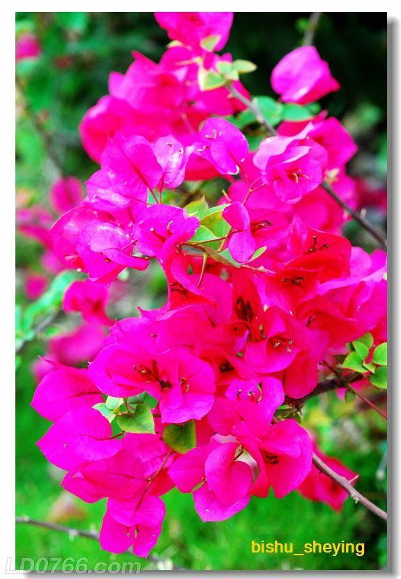 宅紫嫣红花满园08.jpg
