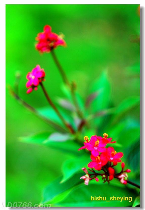宅紫嫣红花满园09.jpg