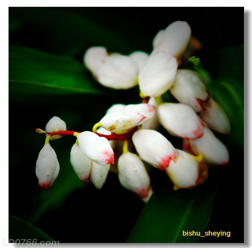 宅紫嫣红花满园10.jpg