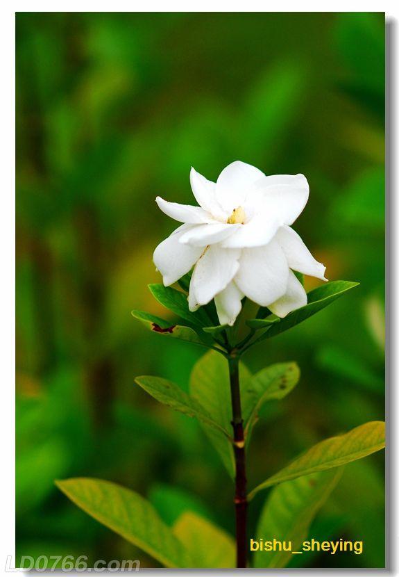 宅紫嫣红花满园12.jpg