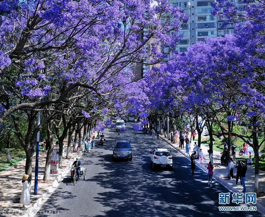 www.yn.xinhuanet.jpeg
