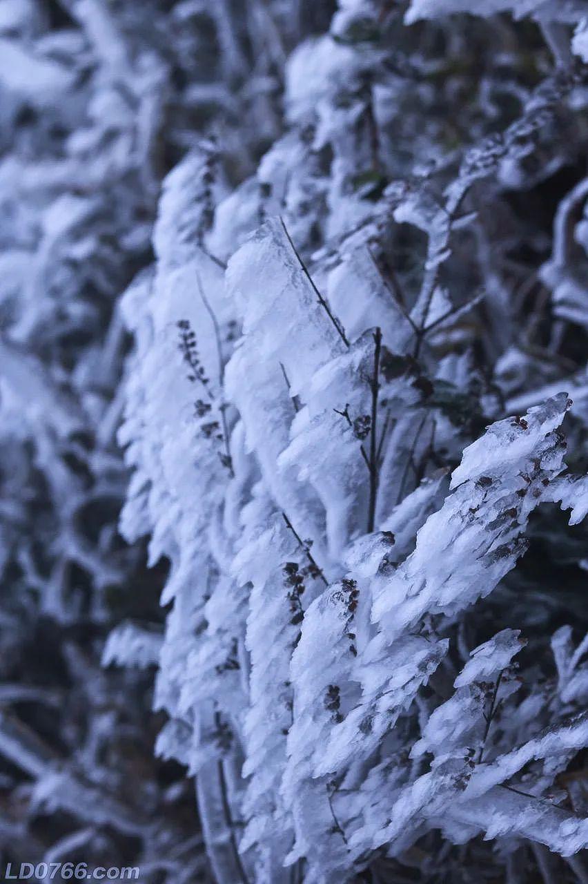 罗定风车山银装素裹酷似北国风光!来欣赏一下